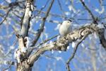 I was taking pictures of the snow on the trees when this curious Nuthatch popped into frame